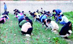 劳动教育如何教育大学生?河南高校在探索